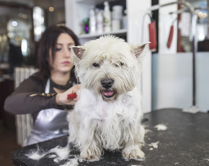 The 10 Best Pet Groomers in Vermont!