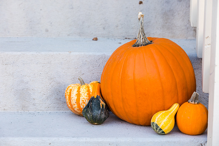 The 9 Best Pumpkin Picking Spots in Vermont!