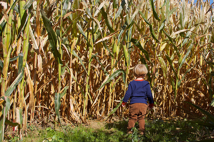 The 10 Best Corn Mazes in Washington State!