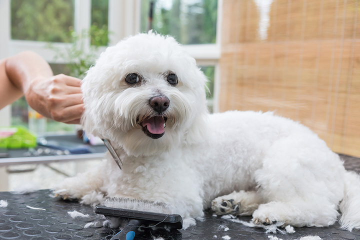 The 10 Best Pet Groomers in Washington!