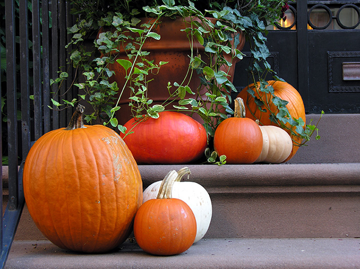 The 10 Best Pumpkin Picking Spots in Washington!
