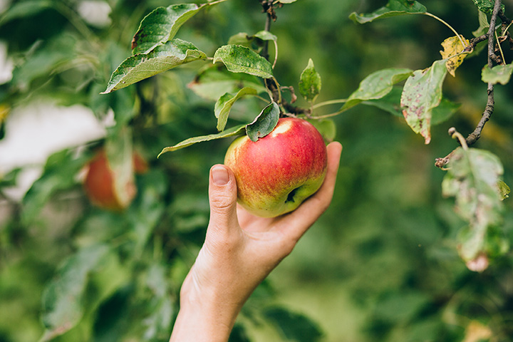 The 10 Best Apple Picking Spots in Wisconsin!
