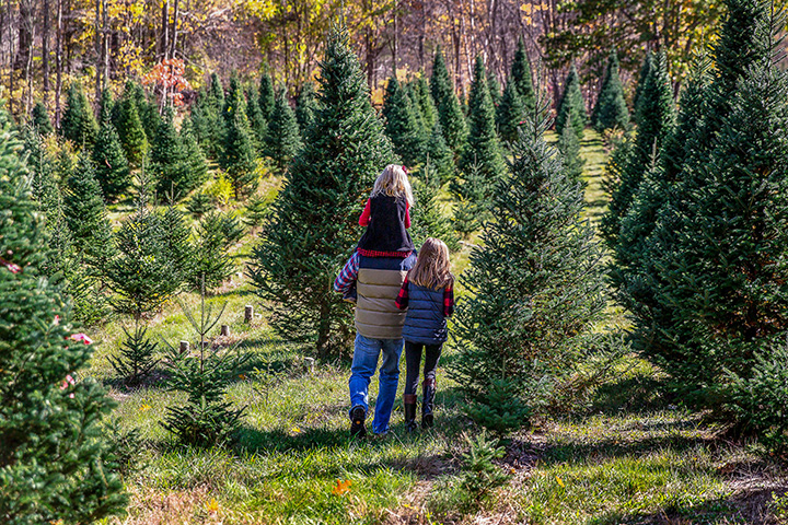 The 6 Best Christmas Tree Farms in West Virginia!