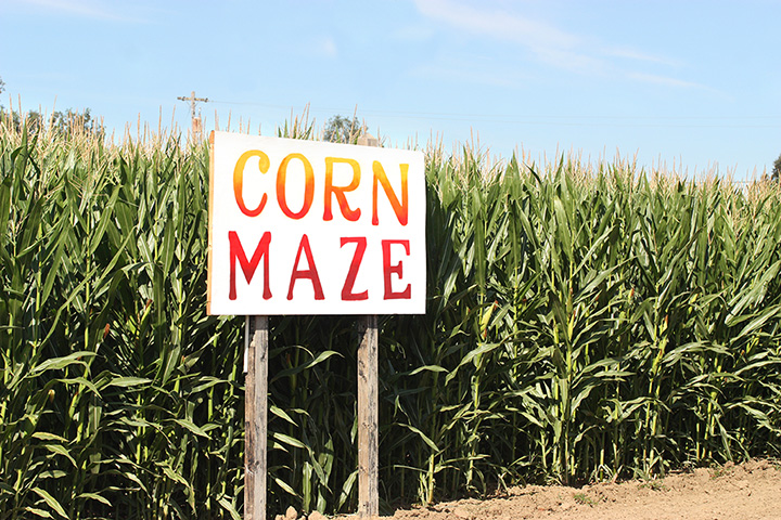 The 9 Best Corn Mazes in West Virginia!