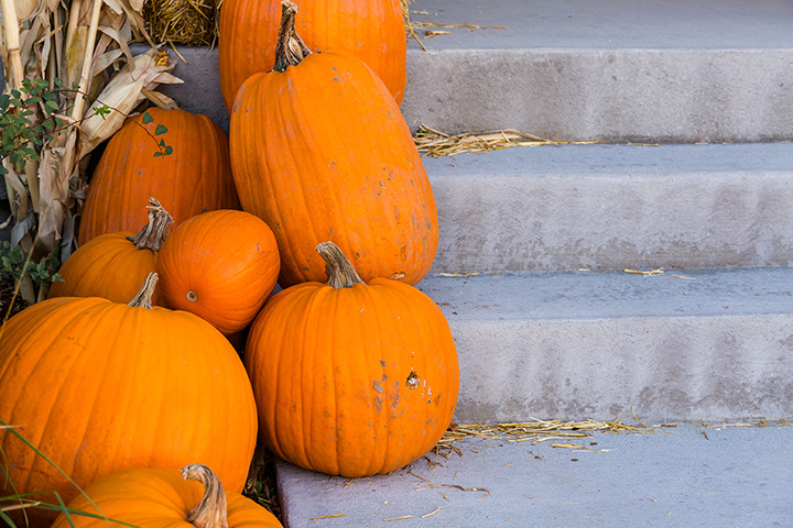 The 9 Best Pumpkin Picking Places in West Virginia!